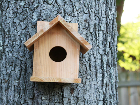 Frequently questions about wooden bird feeder